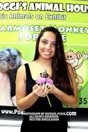 baby marmoset in hands