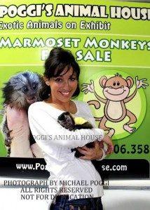 Lady holding Baby Capuchin