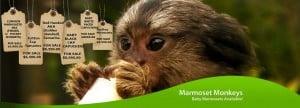 pricing of monkeys