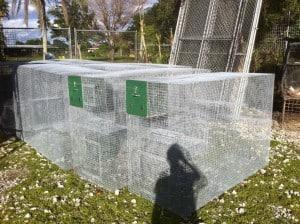 capuchin monkey cage