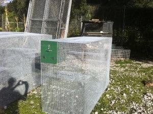 pygmy marmoset cage