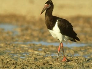 exotic animals for sale abdim's storks for sale in florida