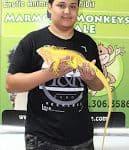 yellow iguana