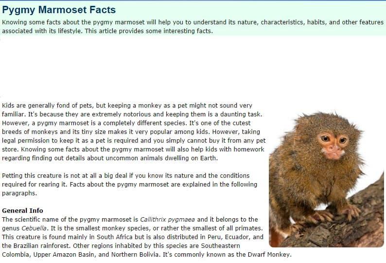 Pygmy Marmoset Facts
